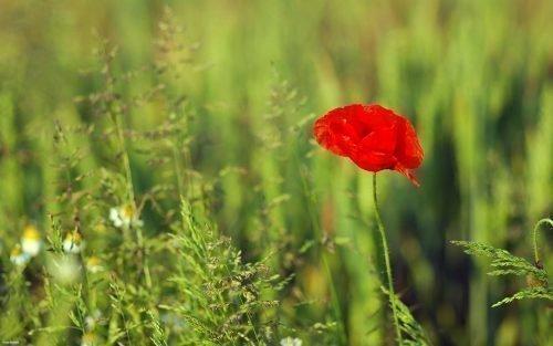 Бутон живого цветка