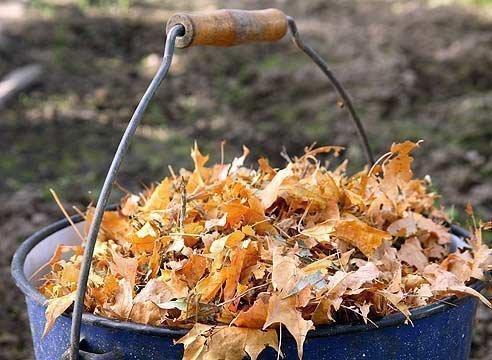 Опавшая листва для отворота