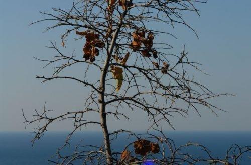 Сухая ветка дерева