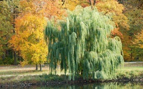 Травы колдовские. Как использует их ведьма, типы трав