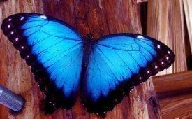 Приметы о залетевшей в дом бабочке