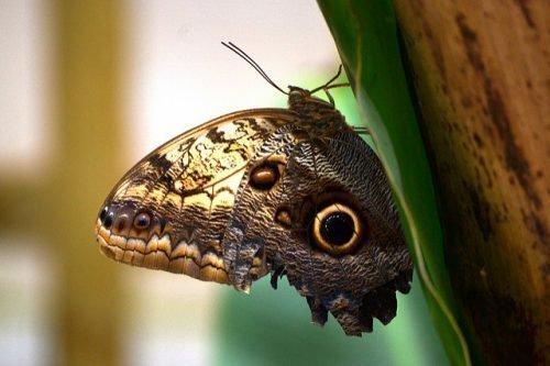 Бабочка со сложенными крыльями