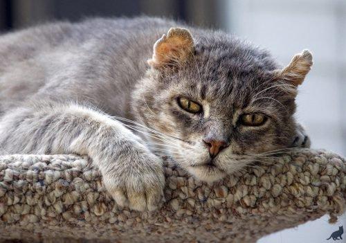 если кот умирает дома приметы