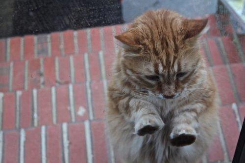 Кот просится в дом
