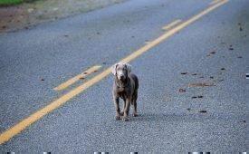 Приметы про сбитых на дороге собак
