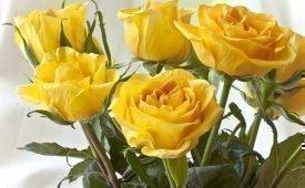 Желтые розы в подарок: народные суеверия