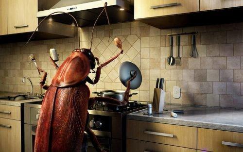 приметы о тараканах в доме
