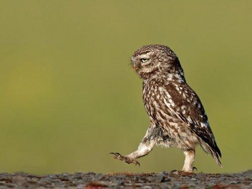 приметы народные про птиц