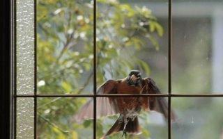 Приметы про птичий стук в окно
