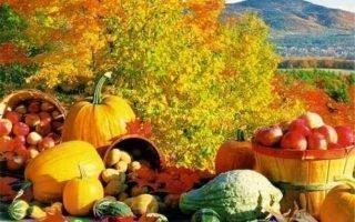 Сезонные приметы по погоде на урожай