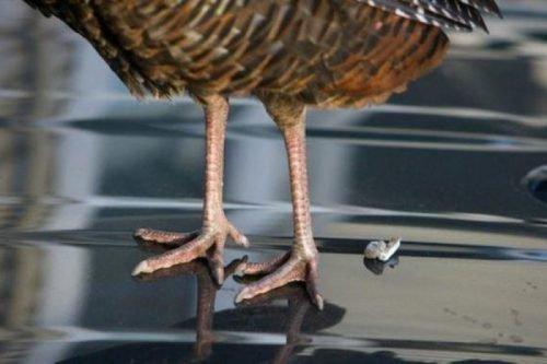 примета птица накакала