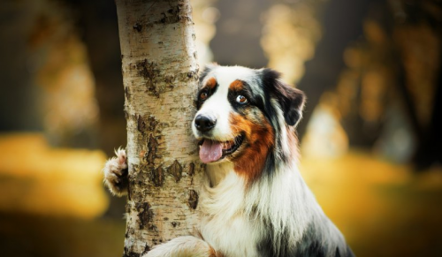 приметы про собак
