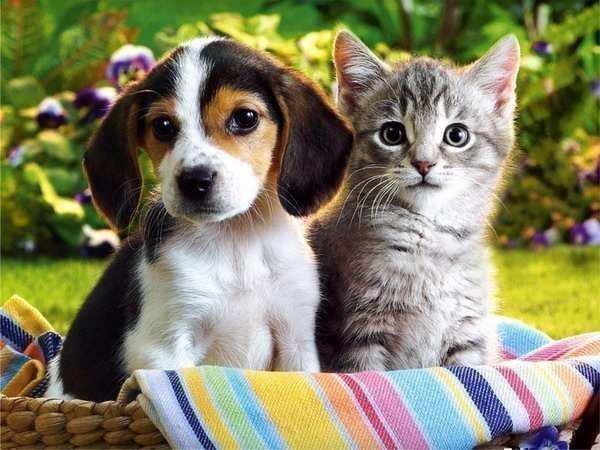 Молитва от порчи на домашних животных