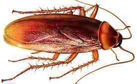 Магические ритуалы, обряды и заговоры против тараканов