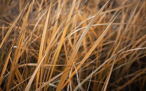 Сухая трава для ритуала