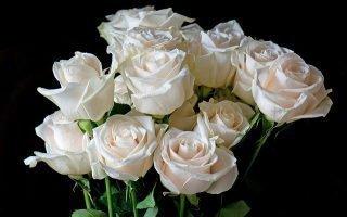 Белые розы в подарок: чего ожидать
