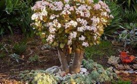 Приметы и суеверия о Денежном дереве