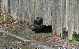 Приметы о черной кошке, перешедшей дорогу