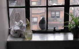 Суеверия о голубе, прилетевшем на подоконник