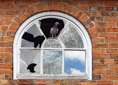 Голубь в окне