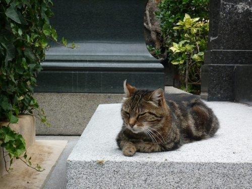 Кот на могиле