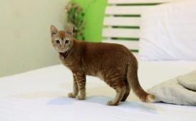 Необычные приметы: кошка гадит на кровать