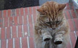 Приметы о пришедшей в дом кошке