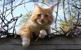 Приметы об уходе кота из дома