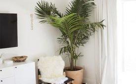 Приметы и суеверия про домашнюю пальму