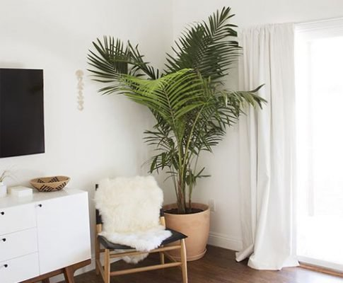 Растение в доме