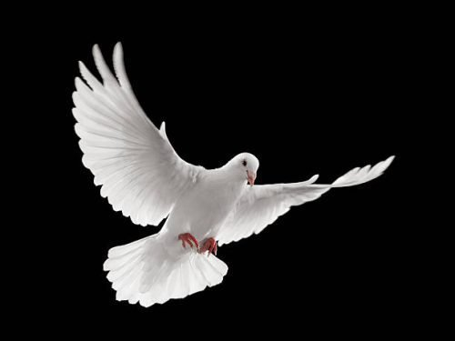 примета голубь ударился в окно и улетел