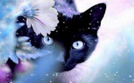 Приметы и суеверия про кошек в доме