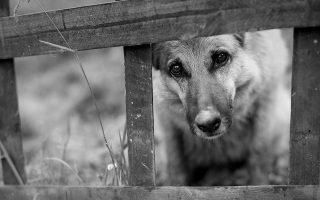 В дом забежала чужая собака: чего стоит опасаться