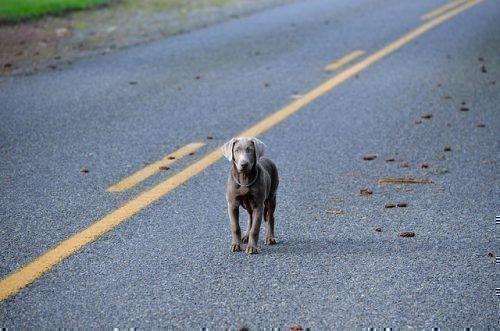 Собака на дороге