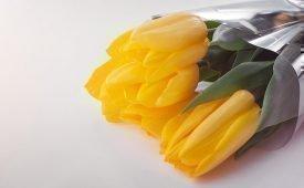 Приметы о желтых тюльпанах