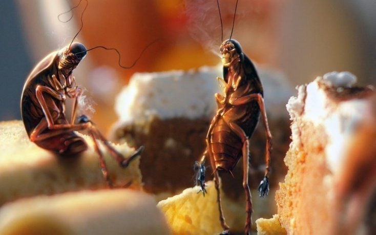 Что делать если появились тараканы в квартире