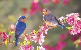 Толкование народных примет о птицах