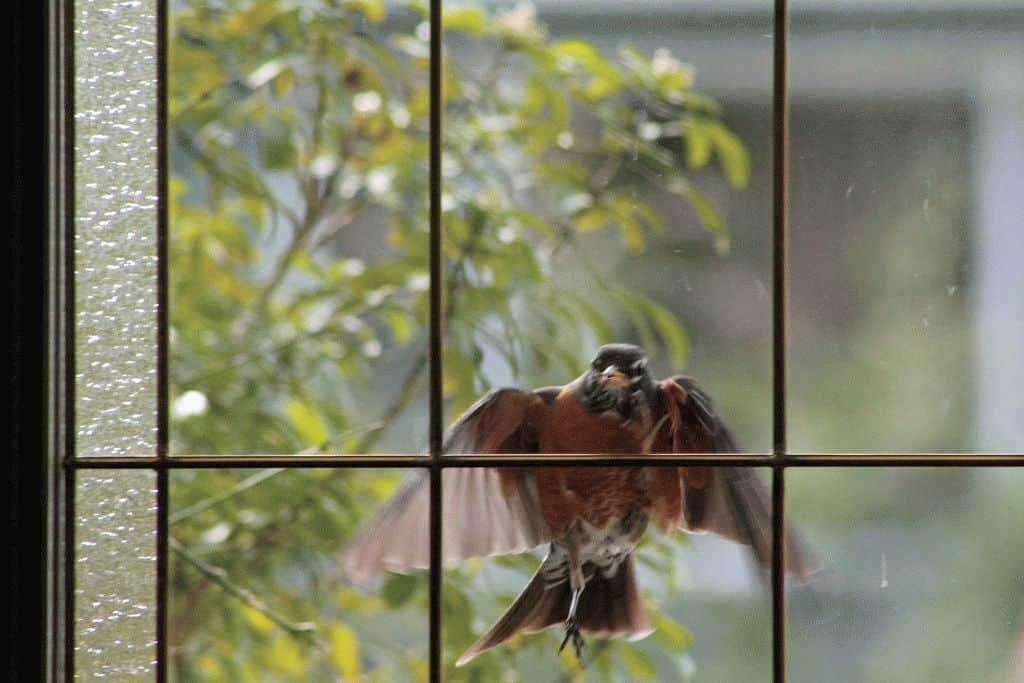 Примета птица стукнулась в окно и улетела