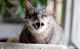 Приметы о чихании кошки