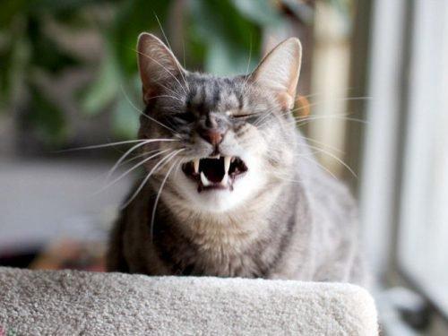 к чему чихает кошка примета