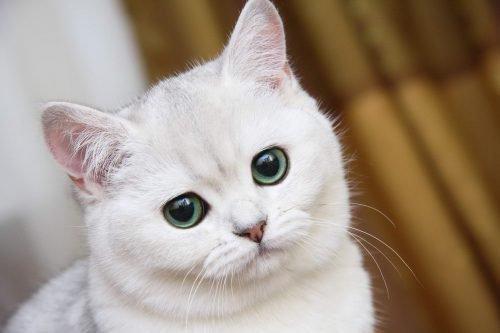 приметы про кошек