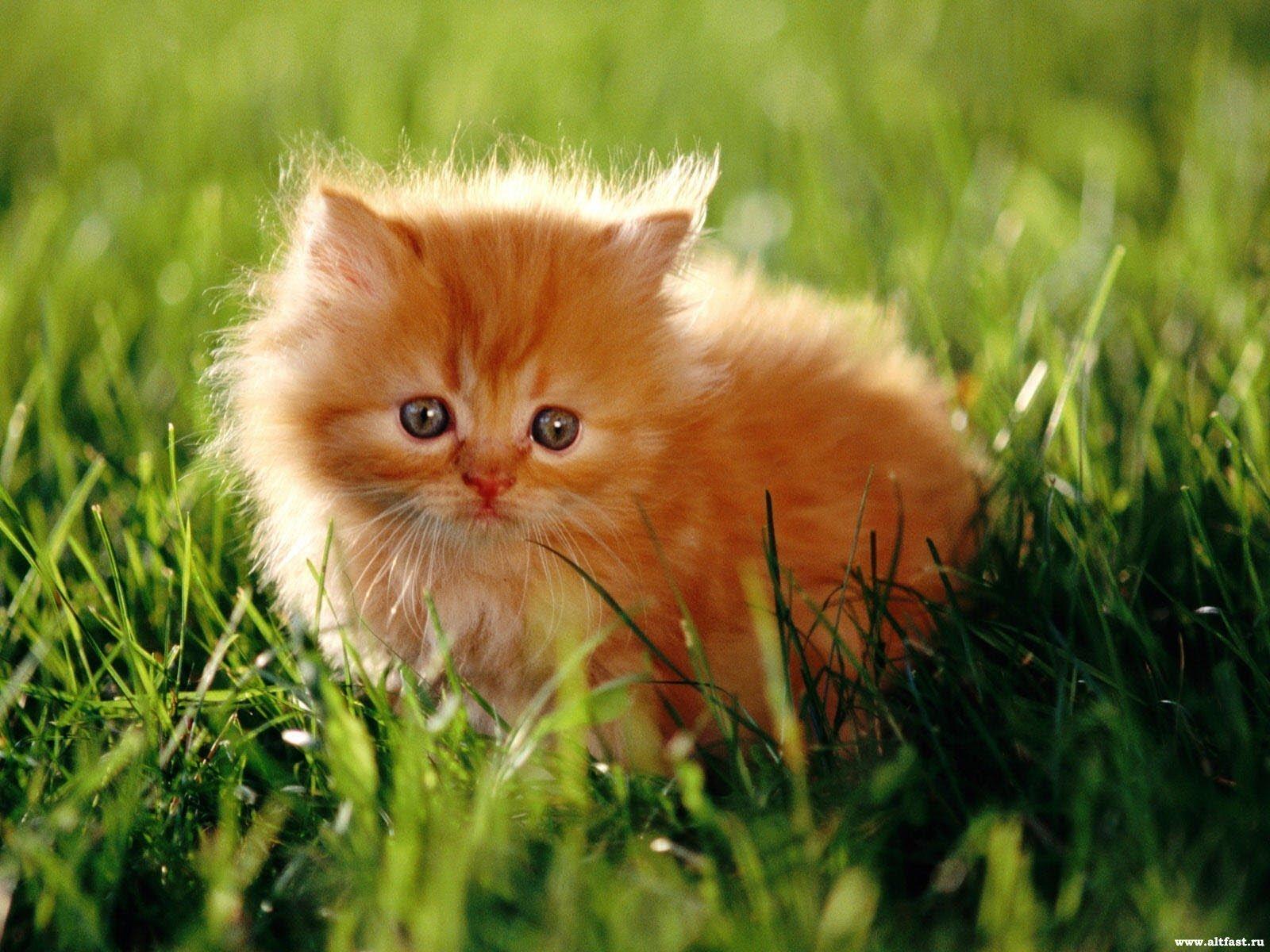 Приметы про кошек и котов в доме