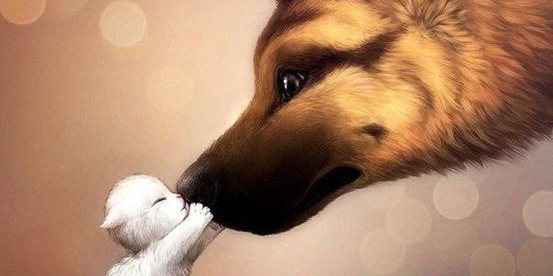 Приметы про собак: сбить на машине, пришла в дом