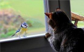 Приметы о стуке птицы в окно