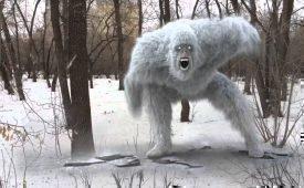 Что известно о снежном человеке