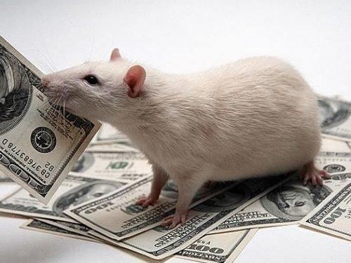 Финансы в год Крысы